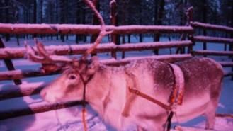 329x185 Reindeer.jpg