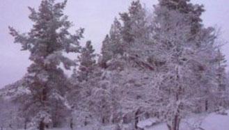 snow in saariselka.jpg