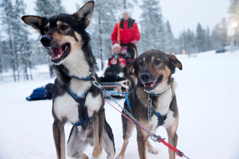 Husky sled ride in Lapland