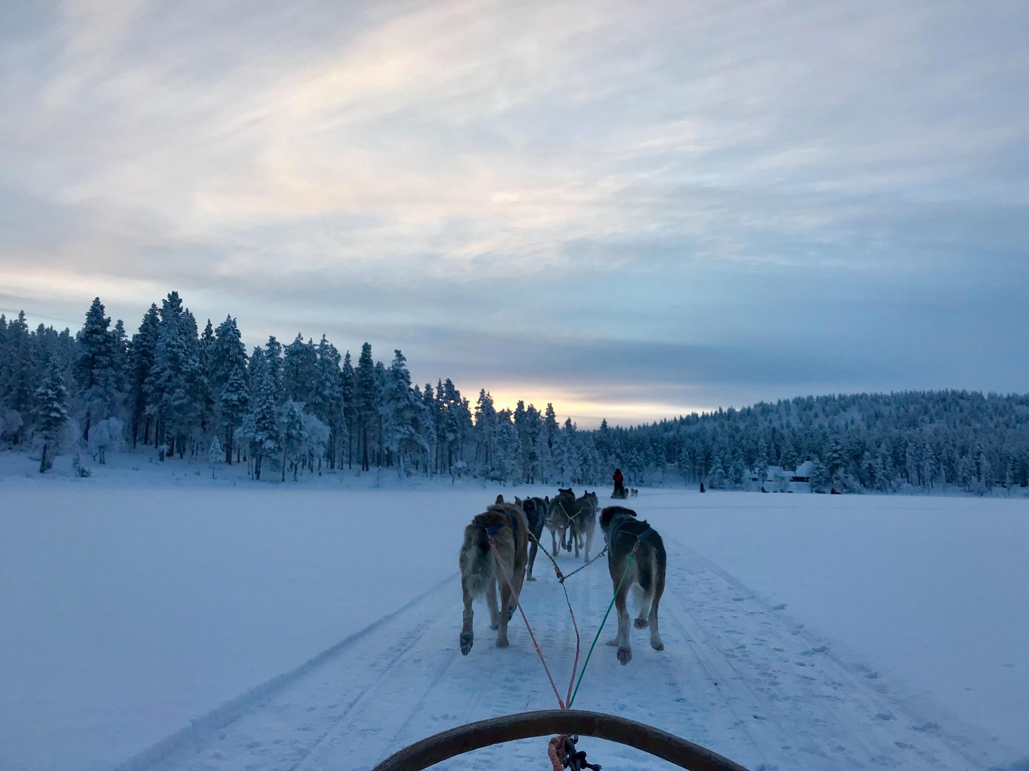 husky sledding with santa's lapland